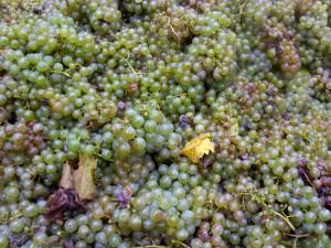 O Mosella. An der Mosel dreht sich alles um Trauben und herrlichen Wein.